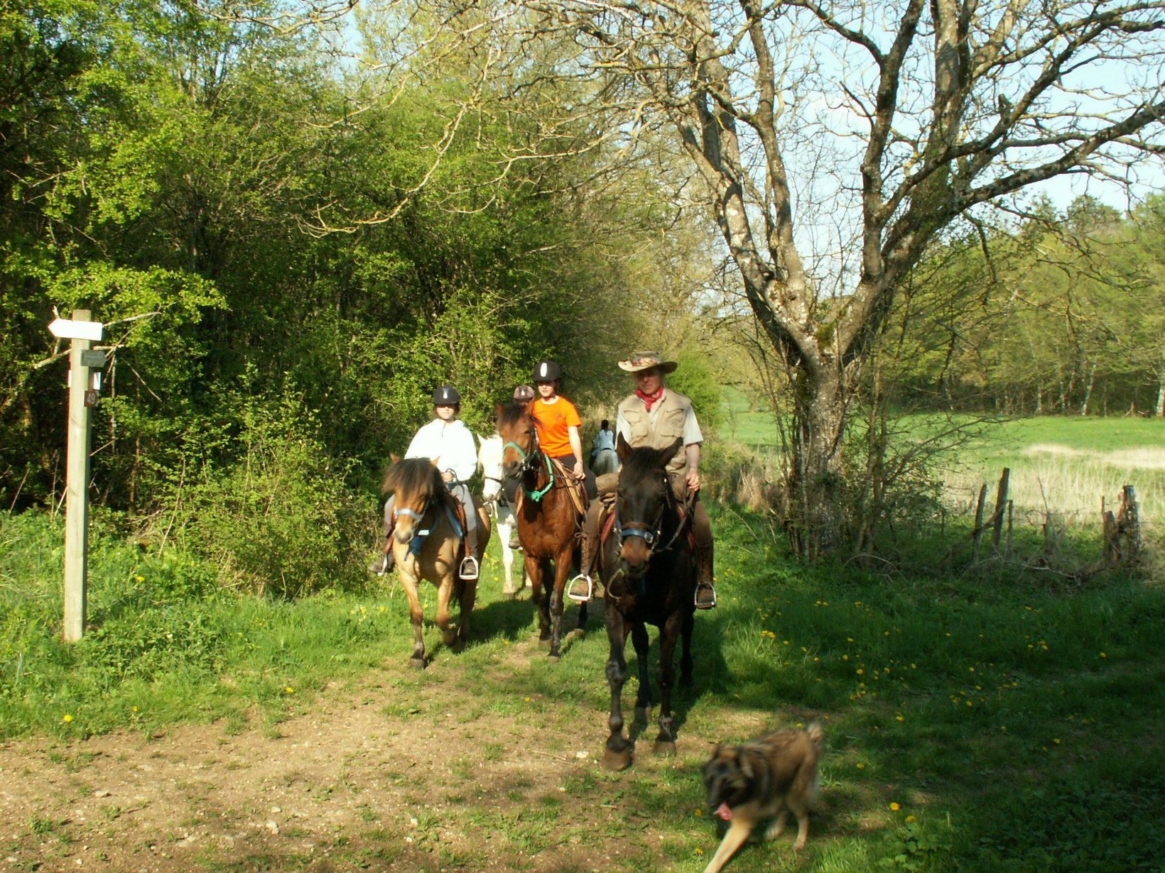 Guided Horse Back Tours