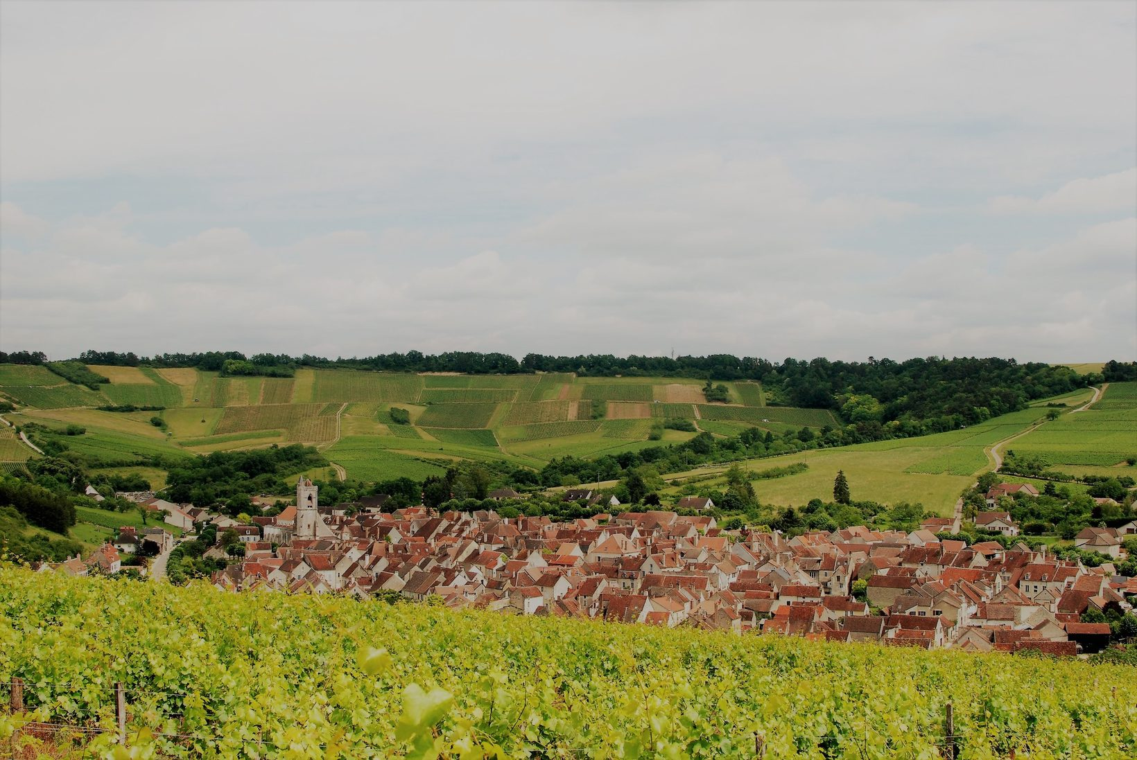 To the Vineyards of Irancy